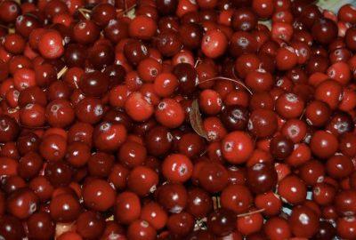 [中環泌尿科醫生] 資訊:蔓越莓能預防尿路感染嗎?